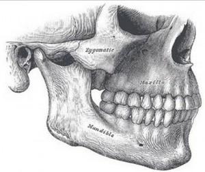 The Jaw Bone pic
