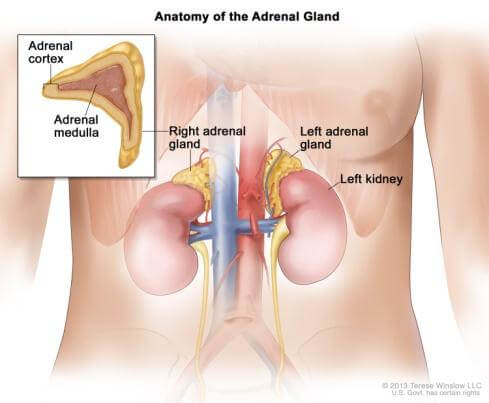 Adrenal Gland Tumor Picture 3
